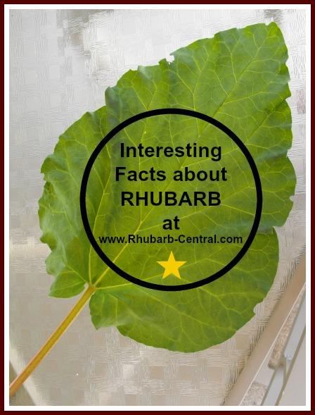 All about Rhubarb - Rhubarb Facts, Rheum rhabarbarum