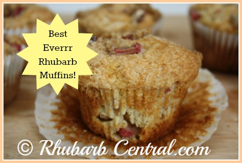Best Ever Rhubarb Muffins Homemade