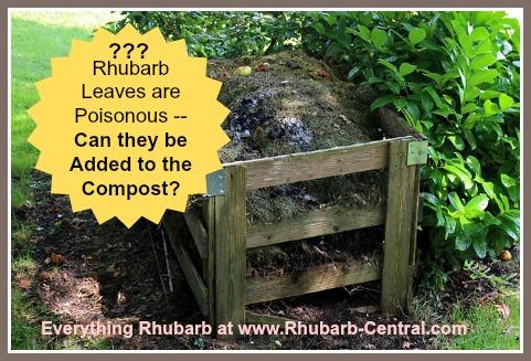 Composting Rhubarb Leaves