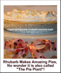 Rhubarb Pie #loverhubarb #whattodowithrhubarb