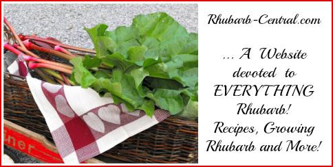 Lots of Fresh Picked Rhubarb