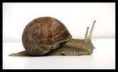 Slug / Snail Image