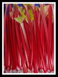 Picture of Forced Rhubarb - Red Rhubarb Stalks