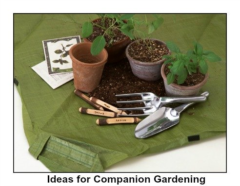 Companion Gardening Ideas What Plant Grow Good Together