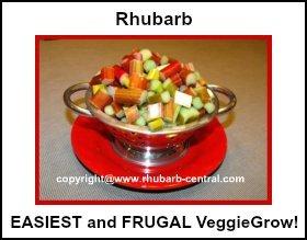 Very Easiest Vegetable to Grow in the Garden