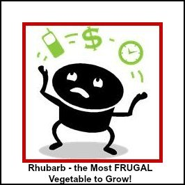 MOST FRUGAL FOOD to Grow in your Garden - RHUBARB!