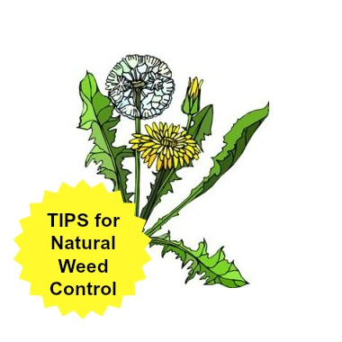 Tips for Natural Weed Control on Driveways and More